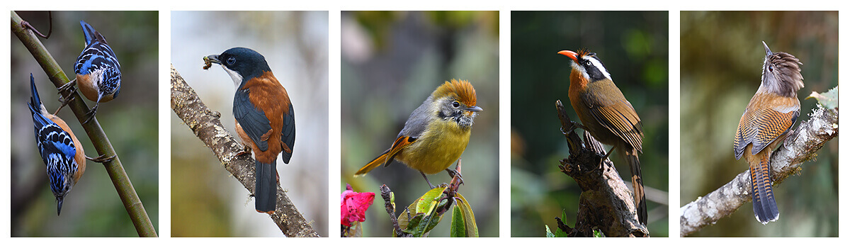 12-days-in-search-of-birds-mammals-butterflies-and-flowers-in-Bhutan