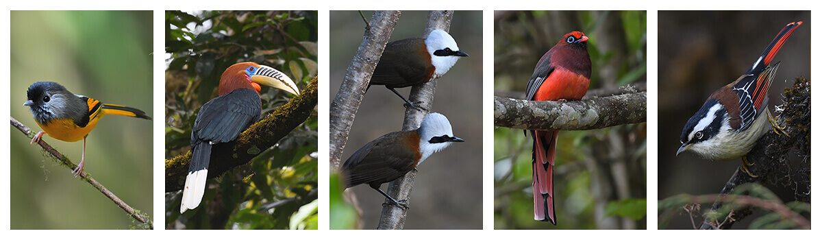 13 days birding and cultural tour in Bhutan