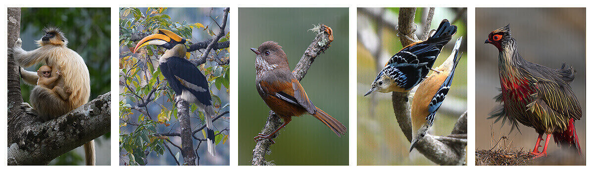 16 days best bird photography tour in Bhutan with one of the best travel company