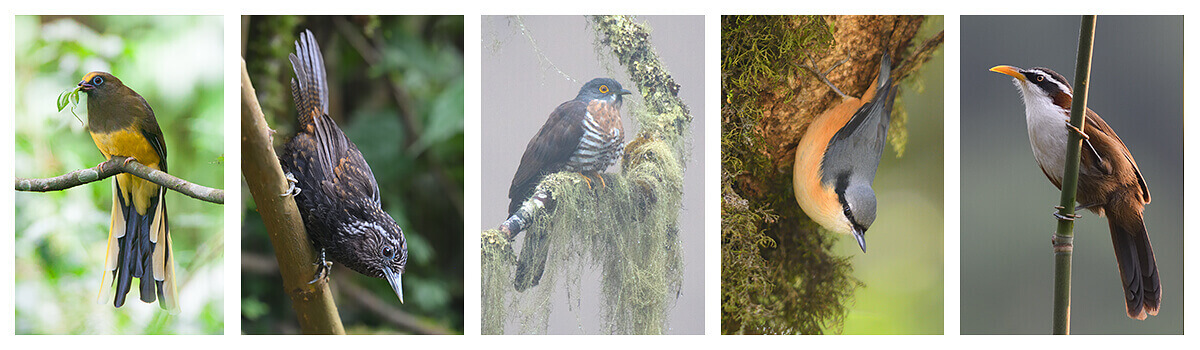 19 days the most exclusive birding and wildlife tour in Bhutan